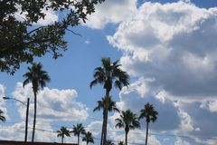 Tien palmen op een gedeeltelijk zonnige dag Royalty-vrije Stock Foto's
