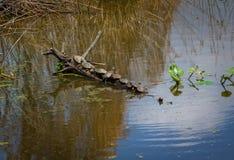 Tien Schildpadden Stock Foto's
