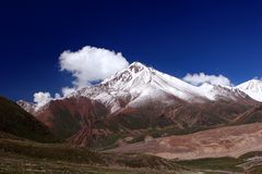 Tien Shan Grey-haired Images stock