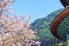 Tien-Yuan tempel med den körsbärsröda blomningen i den nya Taipei staden, Taiwan Arkivfoto