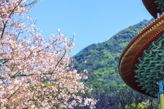 Tien-Yuan temple with cherry blossom in New Taipei City, Taiwan Stock Photo