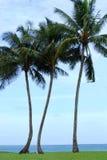 Tienda bajo las palmeras Imagen de archivo libre de regalías