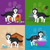 Tienda de animales, mercancías y fuentes, productos del perro de la tienda para el cuidado Fotografía de archivo