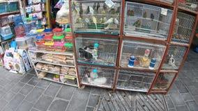 Tienda de animales de Souq del pájaro metrajes