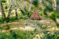 Tienda de campaña de Brown en bosque del abedul del verano Foto de archivo libre de regalías