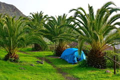 Tienda de campaña debajo de palmtrees imagen de archivo libre de regalías