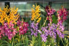 Tienda de la orquídea Fotos de archivo libres de regalías