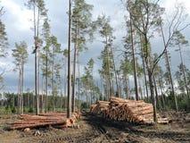 Tienda de madera en bosque Fotografía de archivo