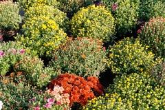 Tienda del jard?n de la horticultura, plantas de cuarto de ni?os bot?nicas de la belleza imágenes de archivo libres de regalías