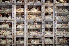 Tienda del pollo en la India imágenes de archivo libres de regalías