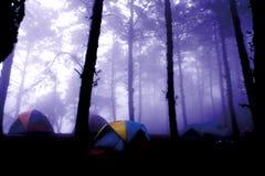 Tienda en bosque del pino y de niebla Imagenes de archivo