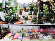 Tienda natural con la planta, el móvil y el suelo de la ciencia Foto de archivo libre de regalías