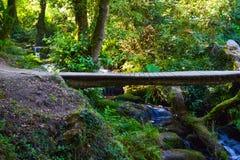 Tienda un puente sobre cruzar un pequeño río en centro de un bosque verde Fotos de archivo libres de regalías