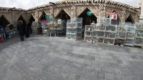Tiendas de animales de Souq del pájaro metrajes
