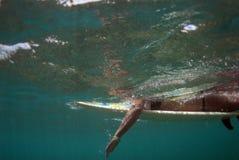 Tiener die van Bikibi surfer de paddelt Royalty-vrije Stock Foto