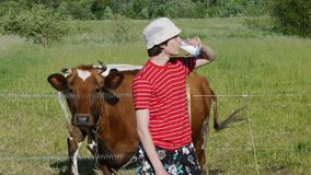 Tiener die verse melk in weide dichtbij met koeien drinken stock videobeelden