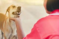 Tiener in roze overhemd die haar bruine hond begroeten wanneer zij retur stock fotografie