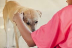 Tiener in roze overhemd die haar bruine hond begroeten wanneer zij retur royalty-vrije stock foto's
