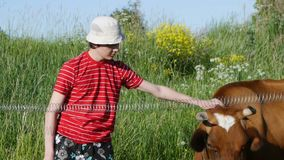 Tiener in weiland en het strijken koe dicht omhoog Jongerengeneratie van landbouwers stock footage