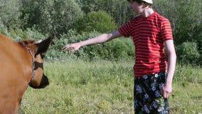 Tiener in weiland het strijken koe dicht omhoog Jongerengeneratie van landbouwers stock footage