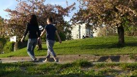 Tienerjarenpaar het lopen de zonnige dag van de kersenbloesem stock videobeelden