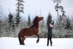 Tienermeisje het bevelen baaipaard om groot te brengen Stock Foto