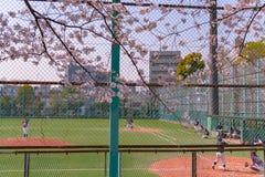 Tieners die honkbal in het seizoen van de kersenbloesem spelen in Tokyo, Japan stock foto