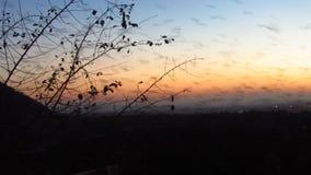 Tientallen Duizenden Knuppels die in Zonsondergang vliegen stock video