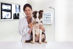 Tierärztlich, einen Hund beim Handeln von Überprüfung überprüfend an der Klinik bord stockfotografie