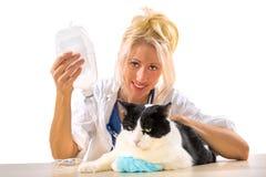 Tierärztliche Frau, die der Katze Therapie macht Stockfoto