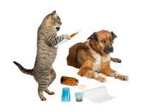Tierärztliche Katze, die kranken Hund auf Weiß behandelt Lizenzfreies Stockfoto
