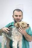 Tierärztlicher Doktor Lizenzfreies Stockbild