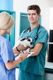 Tierärztlicher Doktor With Rabbit Lizenzfreie Stockfotos