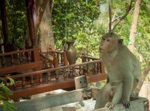 Tier-Affe-trauriger Standort-Baum Lizenzfreie Stockfotografie