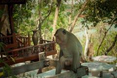 Tier-Affe-trauriger Standort-Baum Stockbild