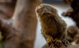 Tier in Amsterdam-Zoo Stockfotografie