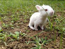 Tier - Babykaninchen Lizenzfreies Stockbild