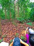 Tier, das in tropischen Regenwald aufpasst Lizenzfreies Stockbild