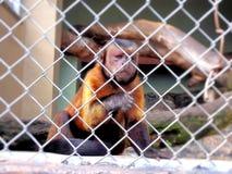 Tier der wild lebenden Tiere Lizenzfreie Stockfotos