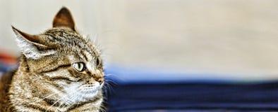 Tier, Haustier, Katze, nett, inländisch, Kätzchen, katzenartig, schauend, Mama stockfoto