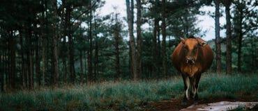 Tier im Wald lizenzfreies stockfoto