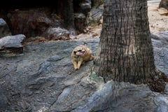 Tier im Zoo Südafrika stockbild