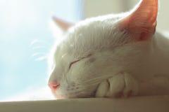 Tier, Katze, Kätzchen, Katze, weiße Katze, Katzenporträt, Stockfoto