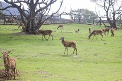 TIER-NATURALEZA AFRIKA PARQUE PARK DER NATUR- lizenzfreie stockfotografie