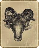 Tier-RAM-handzeichnung. Vektorillustration. Stockfotos