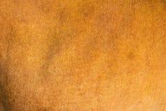 Tier skin Lizenzfreie Stockbilder