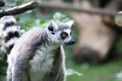 Tier am Zoo Amersfoort Stockbild
