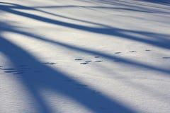 Tierabdrücke über Schneefeld Stockbilder