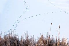 Tierabdrücke auf einem gefrorenen See Stockbild