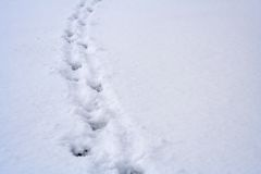 Tierabdrücke auf Schnee lizenzfreie stockfotos